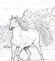 Desenhos Para Colorir Cavalos