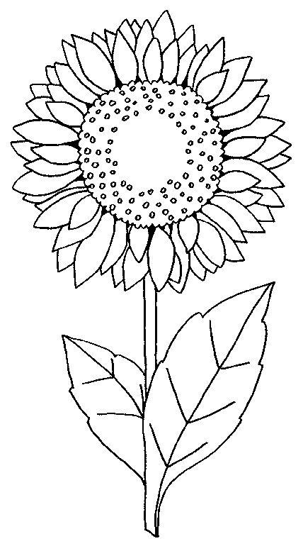 Desenhos de girassol lindos desenhos infantil para colorir de girassol - Coloriage tournesol ...