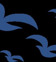Marinheiro Cute - Pássaros