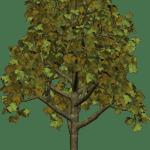 Árvores – Árvore 5 PNG