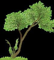 Árvores - Árvore 8