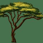 Árvores – Árvore 10 PNG