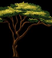 Árvores - Árvore 9