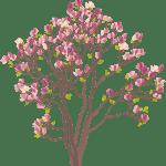Árvores – Árvore Folhas Rosa 2 PNG