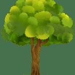 Árvores – Árvore PNG