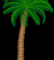 Árvores - Coqueiro 2