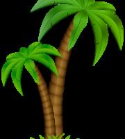 Árvores - Coqueiro 5