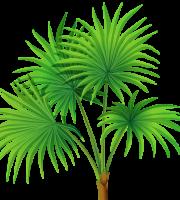 Árvores - Coqueiro 6