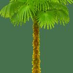 Árvores – Coqueiro 8 PNG