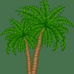 Árvores – Coqueiro PNG