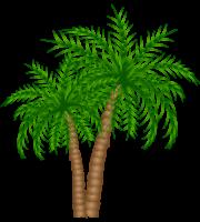 Árvores - Coqueiro