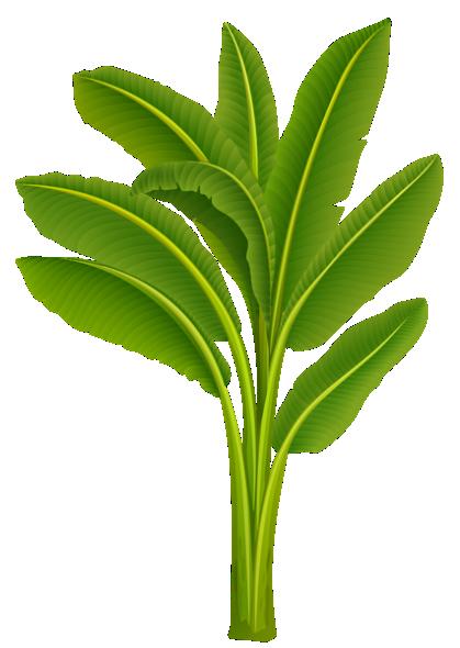 Arvores Folhas Palmeira Png Imagens E Moldes Com Br