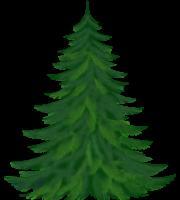 Árvores - Pinheiro 2
