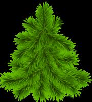 Árvores - Pinheiro