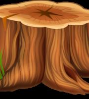 Árvores - Tronco de Árvore