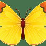 Borboletas – Borboleta Amarela 2 PNG