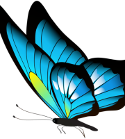 Borboletas - Borboleta Azul e Preta
