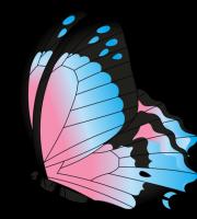 Borboletas - Borboleta Azul e Rosa