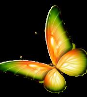 Borboletas - Borboleta Bonita Colorida 13