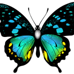 Borboletas – Borboleta Bonita Colorida 3 PNG