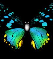 Borboletas - Borboleta Bonita Colorida 3