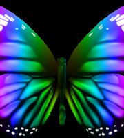 Borboletas - Borboleta Bonita Colorida 5