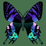 Borboletas – Borboleta Bonita Colorida PNG