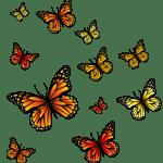 Borboletas – Borboleta Laranja e Preta 3 PNG