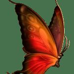 Borboletas – Borboleta Laranja e Preta 4 PNG