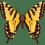 Borboletas – Borboleta Laranja e Preta PNG