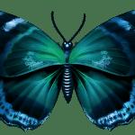 Borboletas – Borboleta Oceano PNG
