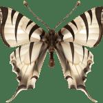 Borboletas – Borboleta Realista Branca 2 PNG