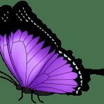 Borboletas – Borboleta Roxa e Preta 3 PNG