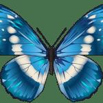 Borboletas – Borboleta Tons de Azul PNG