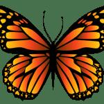 Borboletas – Borboleta Tons de Laranja e Preta PNG