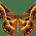 Borboletas – Borboleta Tons de Marrom PNG