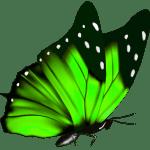 Borboletas – Borboleta Verde e Preta 2 PNG