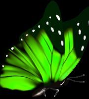Borboletas - Borboleta Verde e Preta 2