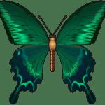 Borboletas – Borboleta Verde e Preta 3 PNG