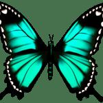 Borboletas – Borboleta Verde e Preto PNG