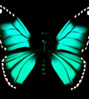Borboletas - Borboleta Verde e Preto