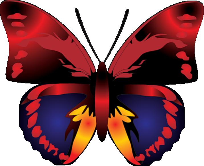 Borboletas Borboleta Vermelha Colorida Png Imagens E