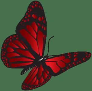 Borboletas - Borboleta Vermelha e Preta 3