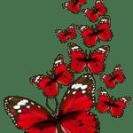 Borboletas – Borboleta Vermelha e Preta 4 PNG