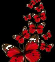 Borboletas - Borboleta Vermelha e Preta 4