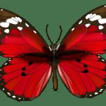 Borboletas – Borboleta Vermelha e Preta 5 PNG