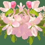 Flores – Flor Bonita 2 PNG