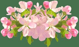 Flores - Flor Bonita 2