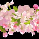 Flores – Flor Bonita 3 PNG