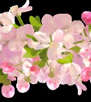 Flores - Flor Bonita 3